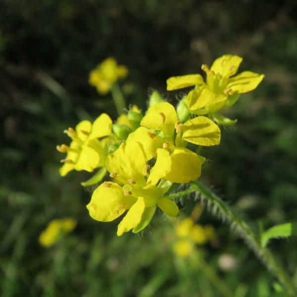 Una planta para cantar
