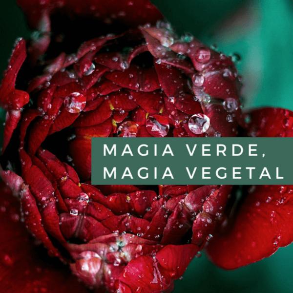 Curso  gratuito de magia con plantas