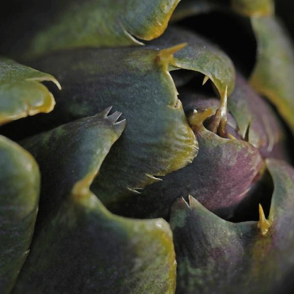 ¿Es adelgazante la alcachofa?