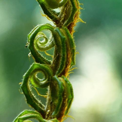 """El concepto """" vida """" en la alquimia vegetal"""